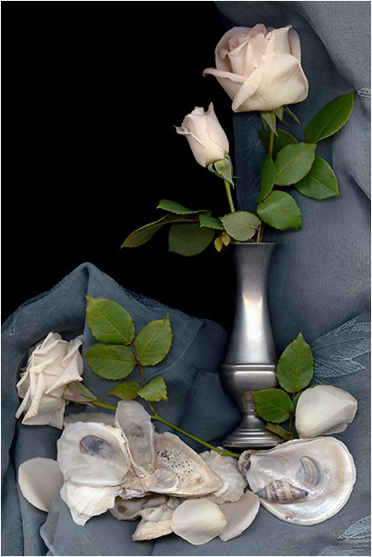 Still Life Scanner Photography By Ellen Hoverkamp
